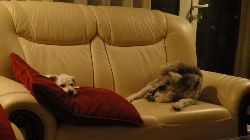 [20110619] Simpson & Duke (2).JPG