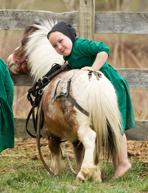 . An Amish girl attempts to mount a miniature horse near the family farm in Bergholz, Ohio on Tuesday, April 9, 2013.  (AP Photo/Scott R. Galvin)