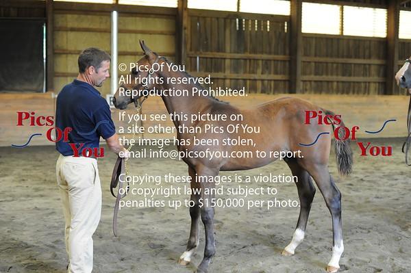 Foal entry 6
