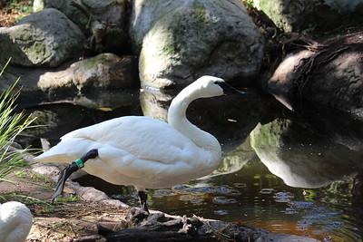 SD Wild Animal Park 2018-05-07