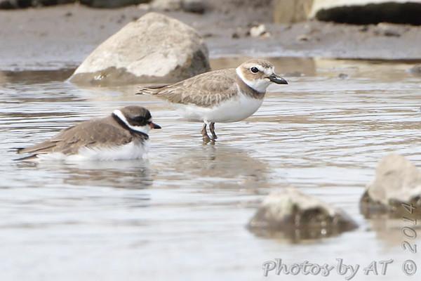 2014-05-04 Riverlands Migratory Bird Sanctuary