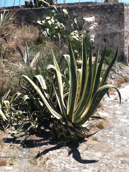 20110813-Ginka-Sicily-20110813--IMG_1285--0323.jpg