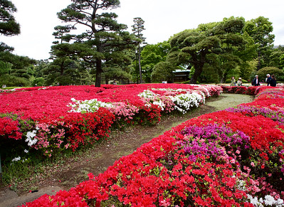 The garden of Imperial Palace