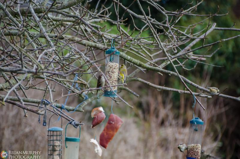 Birds 050218-8.jpg