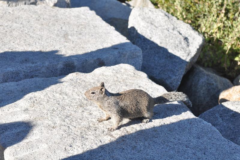 Yosemite 2009/09/06-07
