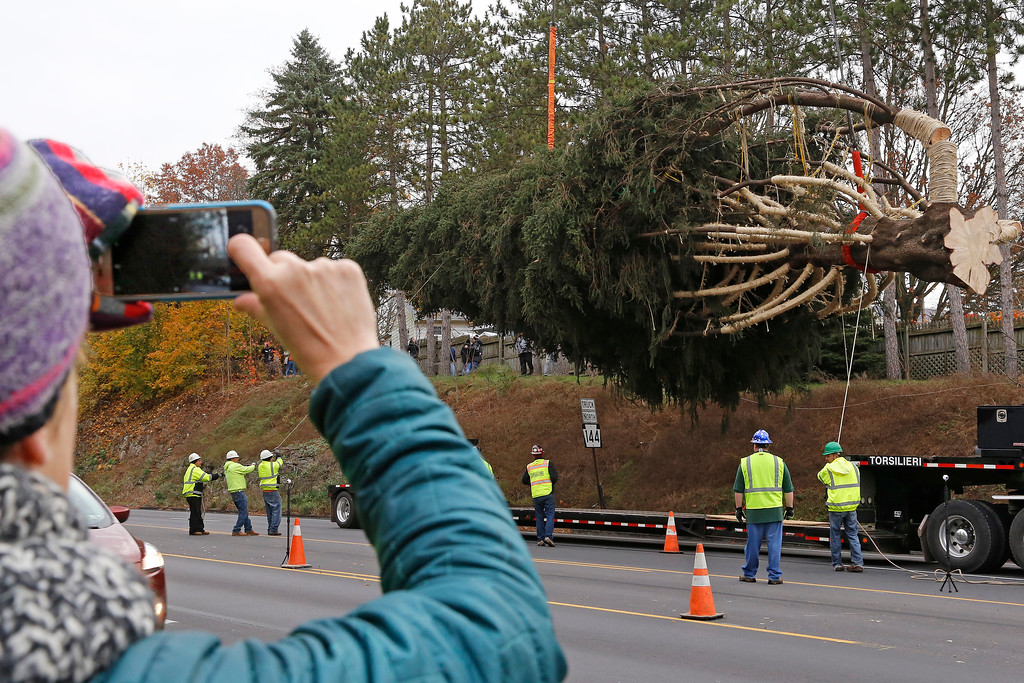 . This year\'s Rockefeller Center Christmas tree, a 75-foot tall, 50-foot in diameter, Norway Spruce, weighing more than 12 tons, is guided onto a flatbed truck after being cut from the yard of Jason Perrin in State College, Pa., Thursday, Nov. 9, 2017. The tree will be driven to Rockefeller Plaza in New York City, and put in place on Saturday, Nov. 11, from 8 a.m to 11a.m. in front of 30 Rockefeller Plaza. (AP Photo/Gene J. Puskar)
