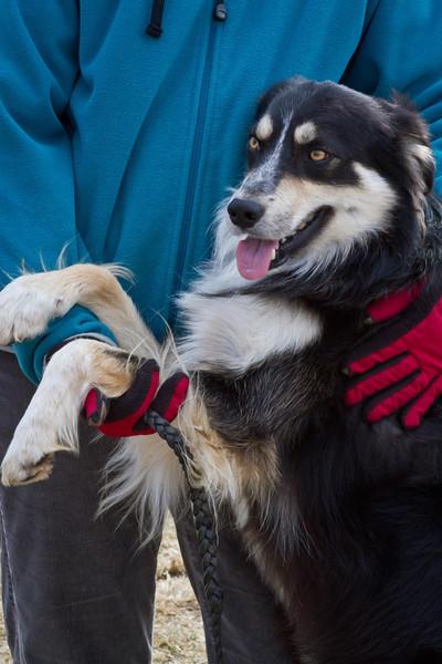 Dog Trials @ Rural Hill
