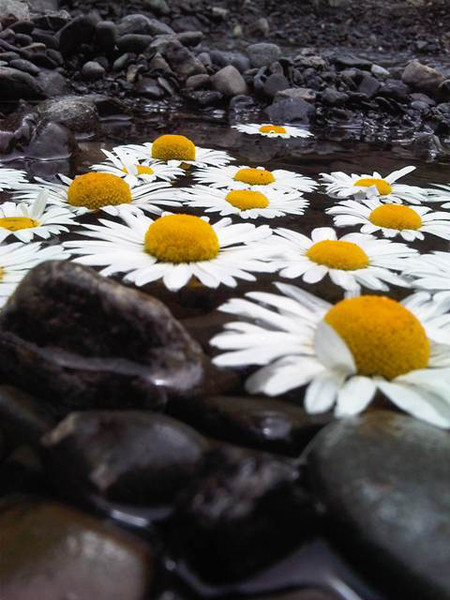 daisy_background_1.jpg