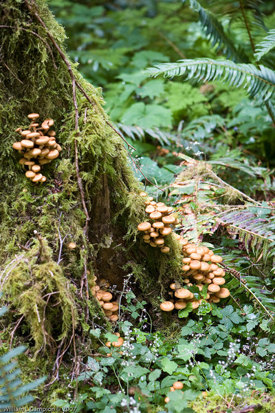 Don't eat the mushrooms, Stair Case in Olympic National Park