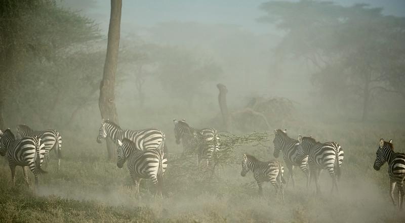 Tanzania selection 90.jpg