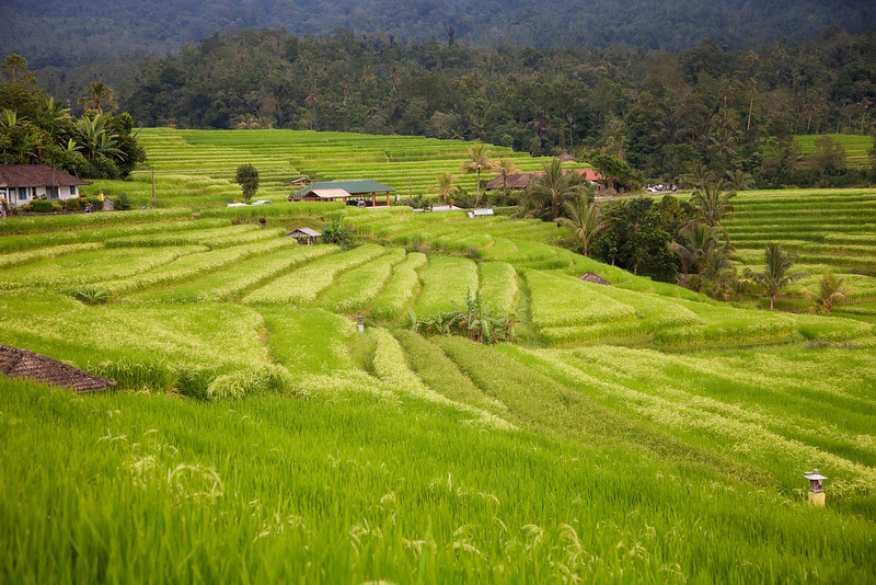 Banaue Rice Fields, a UNESCO World Heritage Site