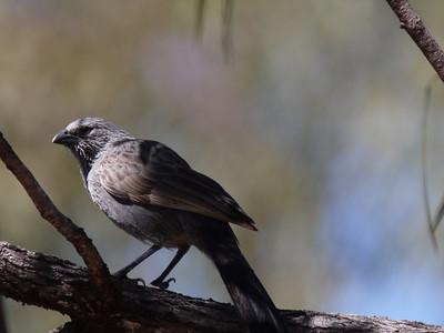 Best Australian Birds 2012