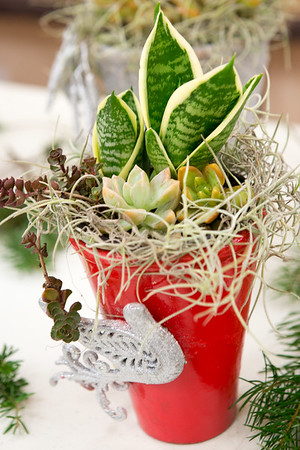 2016 12  Holiday Dish Gardens