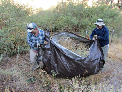 Clearing Yellow Starthistle from Mangini Ranch