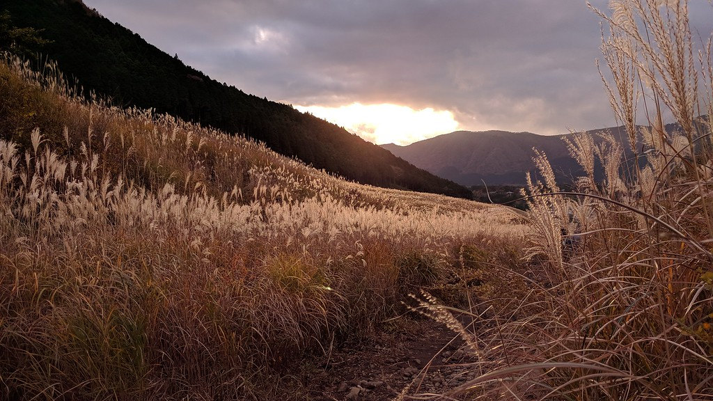 Sengokuhara pampas grass fields in autumn.