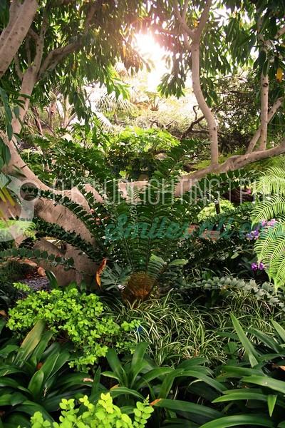 Jungle Flare_batch_batch.jpg