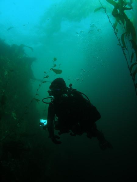 Diver in Landing Cove, Anacapa Island, CA