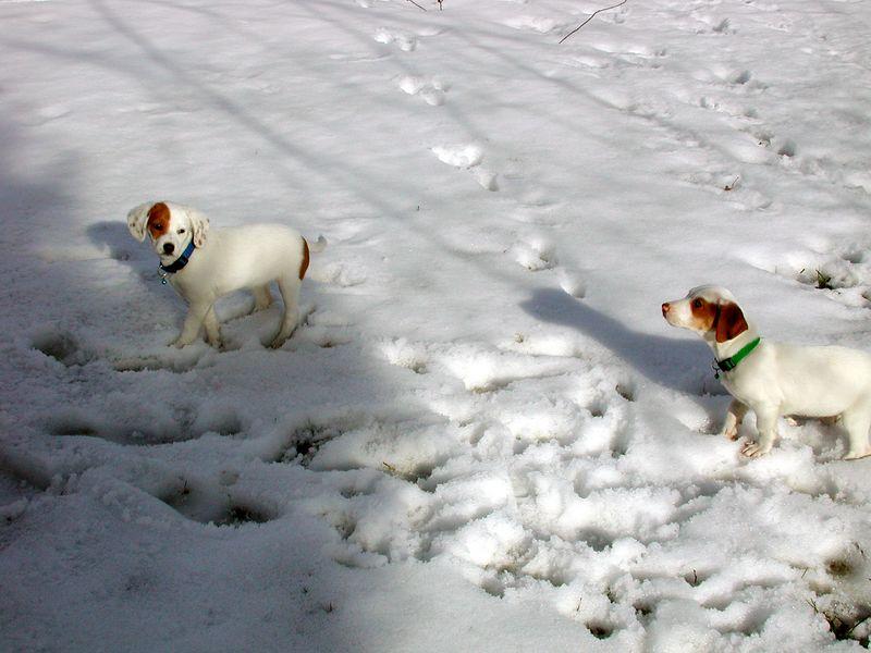 Feb 05- Puppies 025_edited.jpg