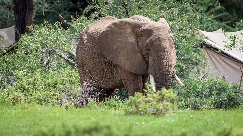 Kenya-0256.jpg