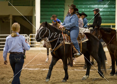 Colorado Mustang Days Cattle Class 3.9.14
