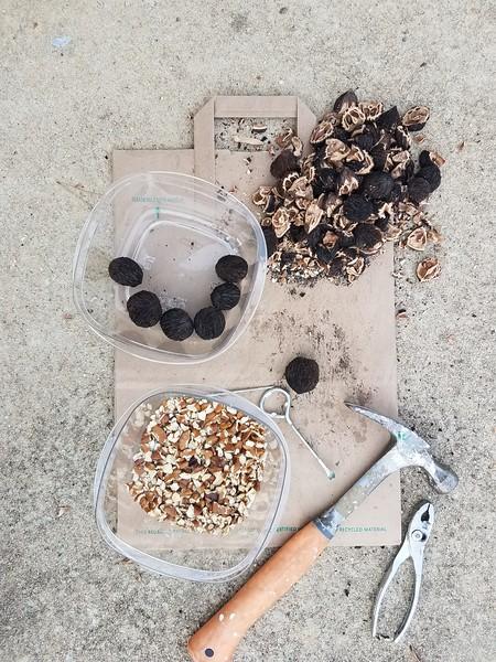 Cracking Black Walnuts