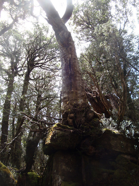 This amazing tree was growing on top of a jumble of boulders.