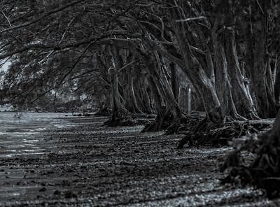 Desolations