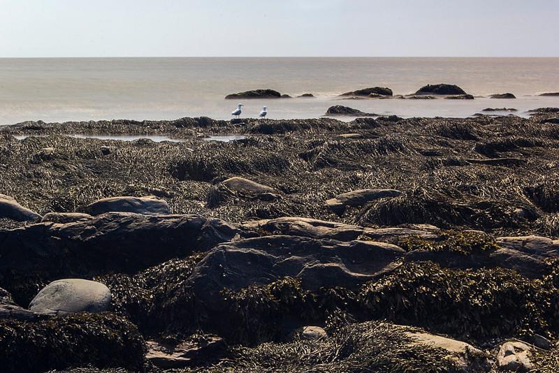 coastalgulls.jpg