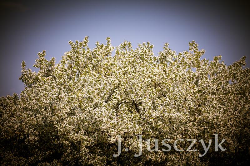 Jusczyk2021-9570.jpg