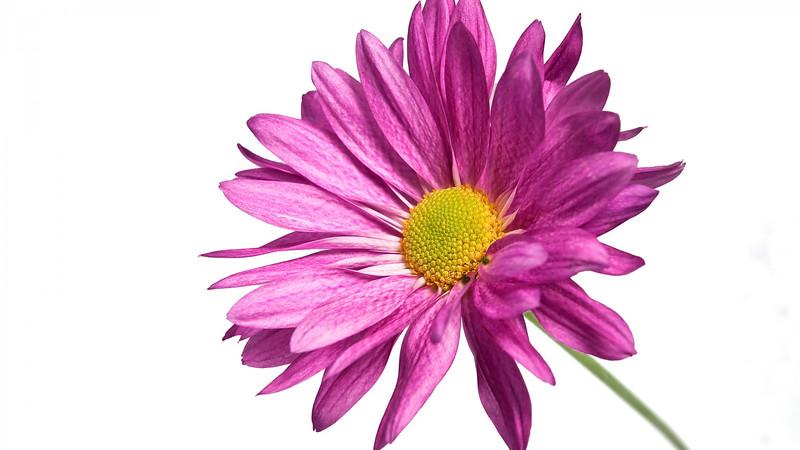 Flowers2 1920x1080 (37).jpg