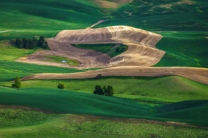 Palouse Ground