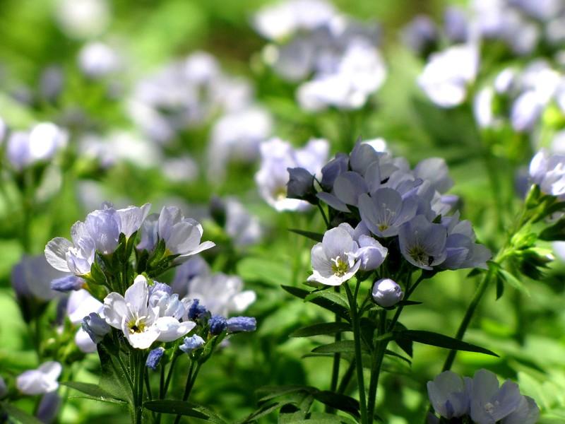 amh FLOWERS (1166).jpg