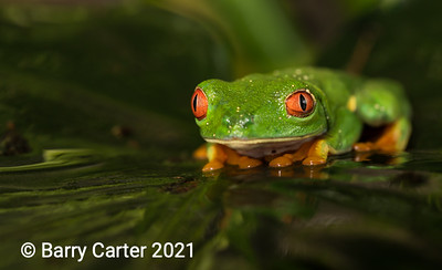 Frogs, Newts and Toads