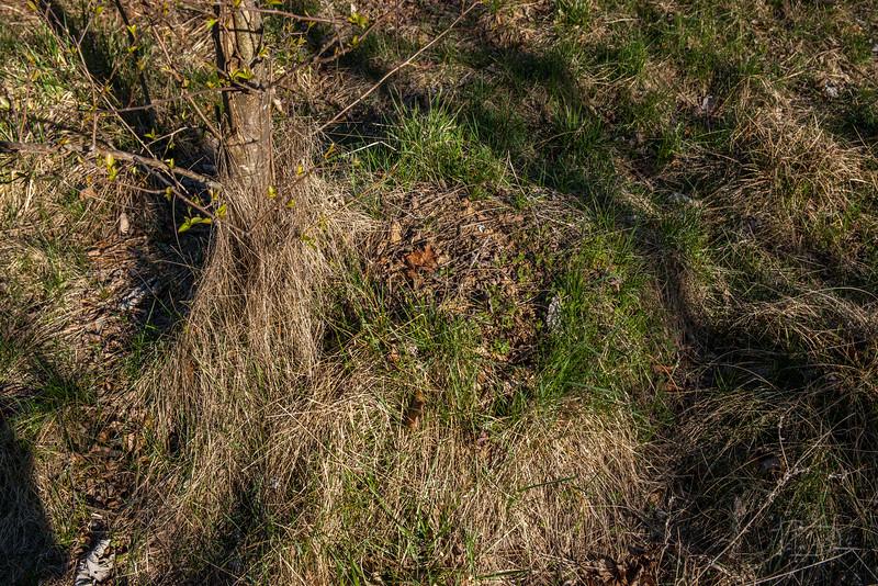 ant or termite mound?