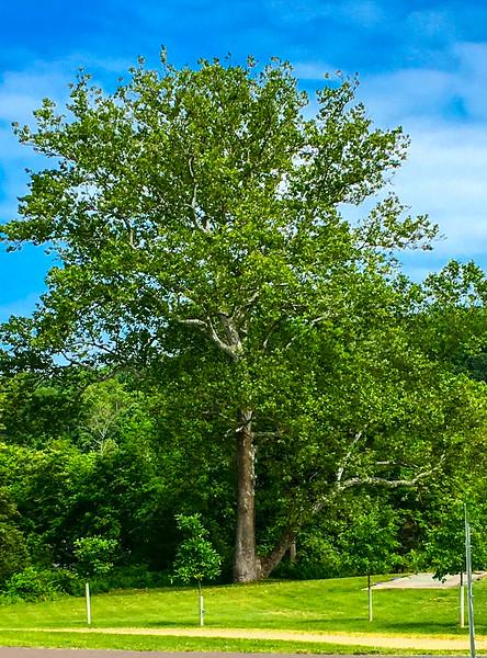 Raedler Tree Spring.jpg