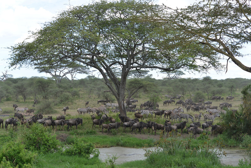 East Africa Safari 264.jpg