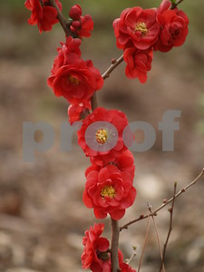 anticipate-springtime-with-early-bloomers