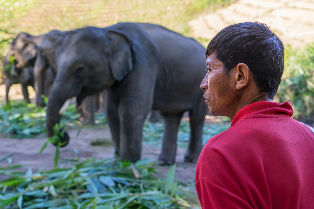 Mae Chaem Mahout Elephant Eating