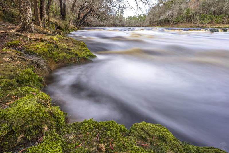 Suwannee River rapids at Big Shoals State Park 2