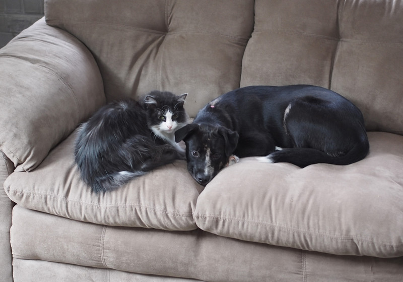 dog&cat3.jpg