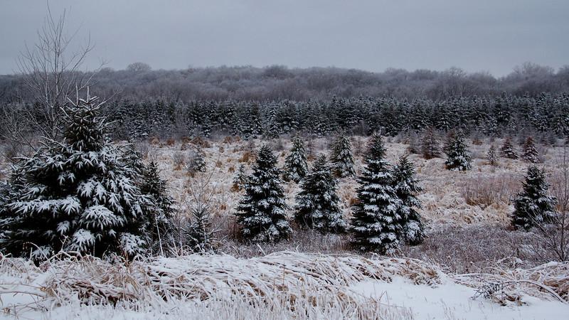 Snow Day 004.jpg