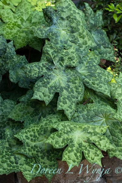 The Chartreuse Garden_1009.jpg