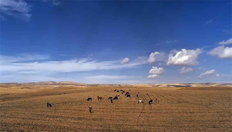 Anatolia on the road
