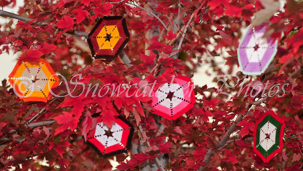 Candy Corn Snowflakes decorating my October Maple Tree