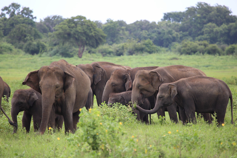 Safari Guide to Kaudulla National Park