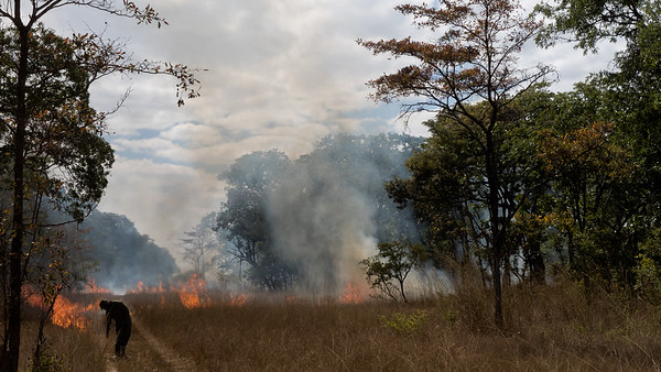 Kasanka Controlled burning