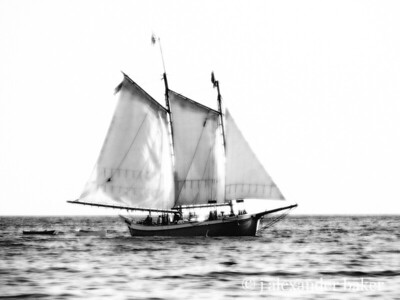 Maine Schooner - Black & White