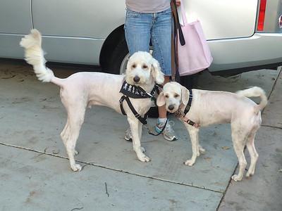 Pups Get a Haircut