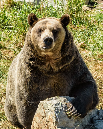 Bear Essentials when Hiking or Camping