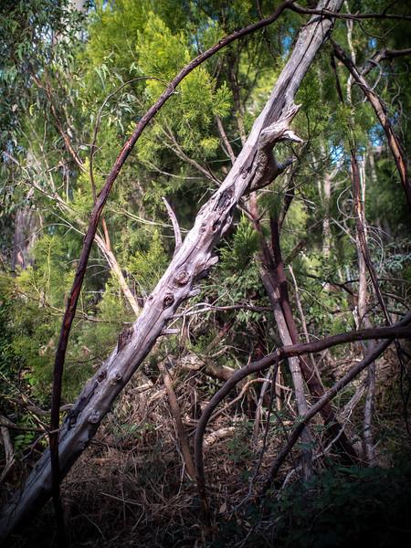 20180522 tree reference 1913  .JPG